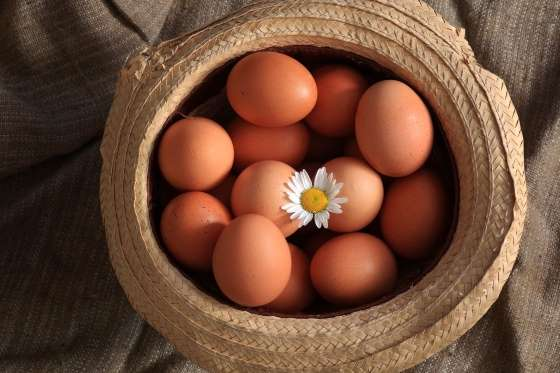 Check Out: 10 Incredible Fun Facts You Didn't Know About Eggs