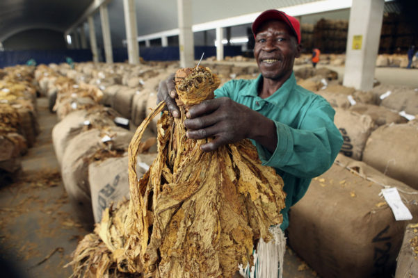 WHO Campaigns Against Zimbabwe's Major Export